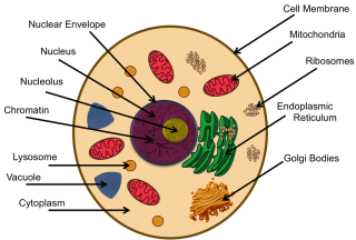 Parts of a cell